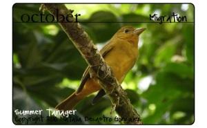 birding tours panama