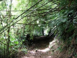 Camino de Cruces
