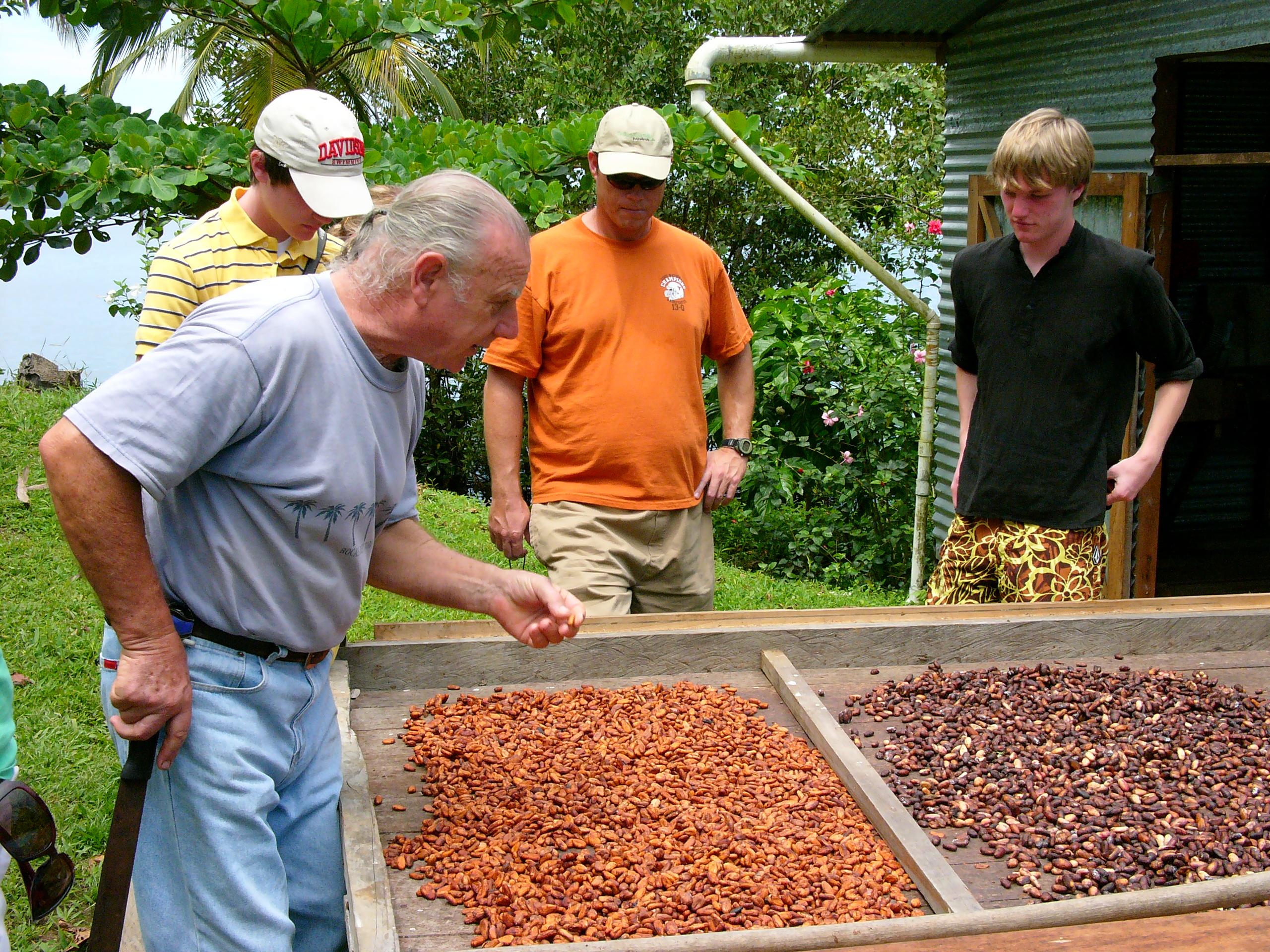 Chocolate farm 4 – EcoCircuitos Panama's Blog