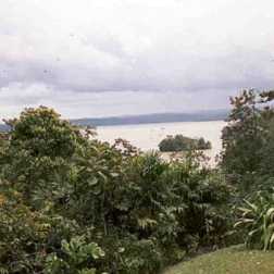 View of Gatun Lake from the Lab.