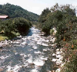 Caldera River near the Panamonte Hotel.