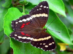 panama-wildlife-09