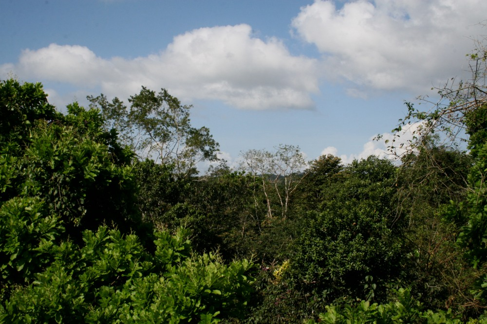 a view of the Forest in Panama