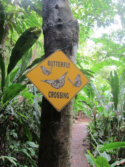 Butterflies crossing in Manuel Antonio