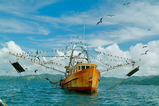 Panama fish catch 40 percent larger than reported