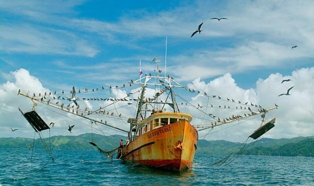 Panama fish catch 40 percent larger thanreported