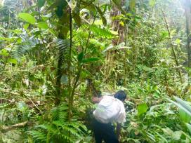 darien jungle trek with ecocircuitos