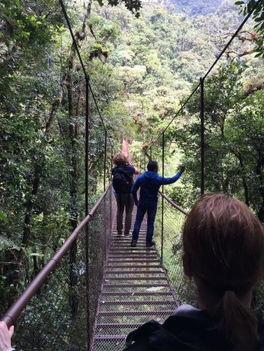 Panama Cloudforest