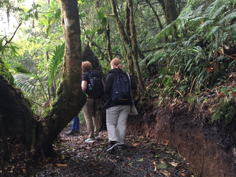 Hiking the cloudforest